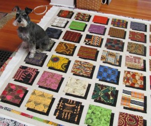 "Sassy's friend and miniature schnauzer who lives with my long-arm quilter friend, ""seasoned"" the quilt once the quilting was complete..."