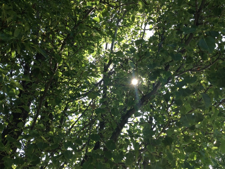 On a walk, listening to inspirational audiobook, stopped to look at the sun through the trees