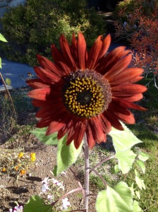 Random pretty sunflower which you will have time to enjoy once you declutter your life ;-)