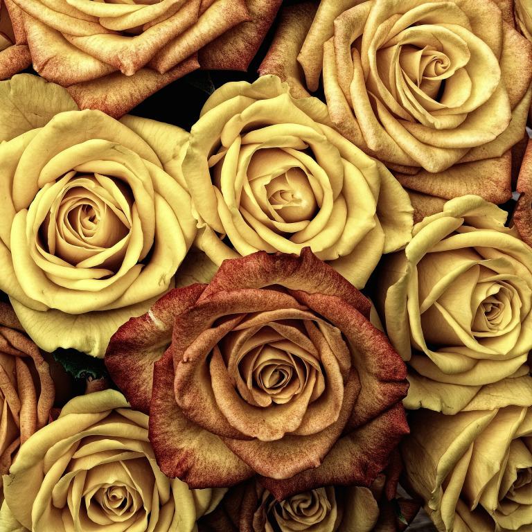 roses-66527_1920