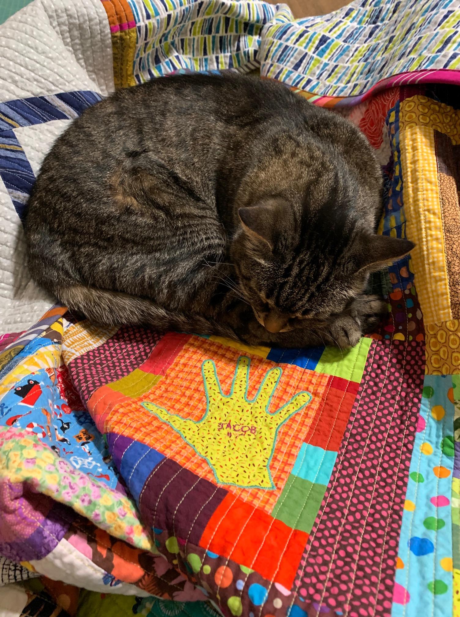 #4- Izzy on quilt